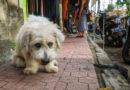 """Donatón """"Virtual"""" por los animales sin hogar, necesita nuestro apoyo"""